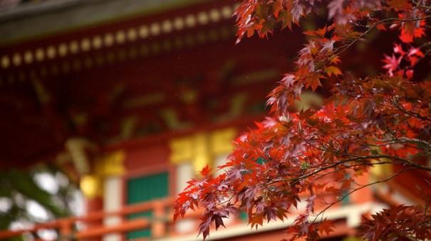 japanese-tea-garden-22416