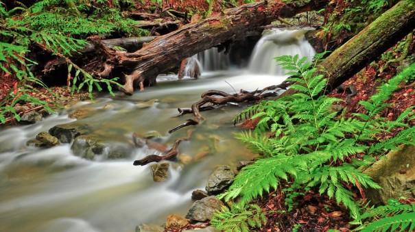muir-woods-22360