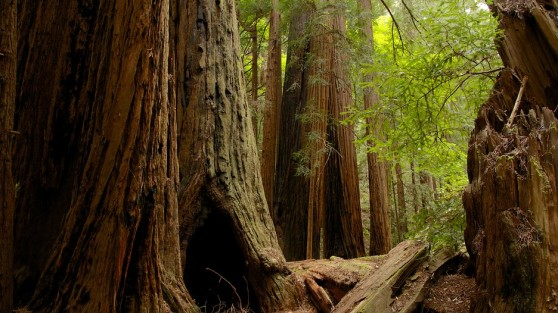 muir-woods-22364