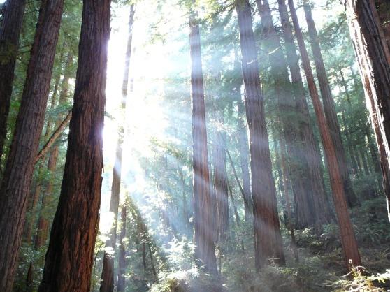 trees_and_sunshine
