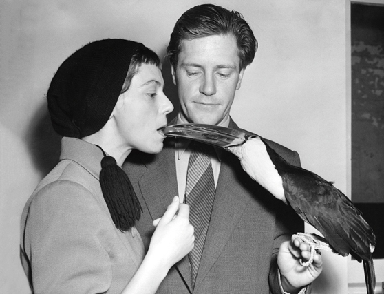 The Durrells and a Toucan